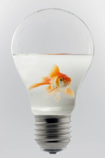 Concept of a goldfish in a light bulb