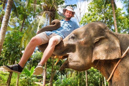 Elephan lifting a tourist.