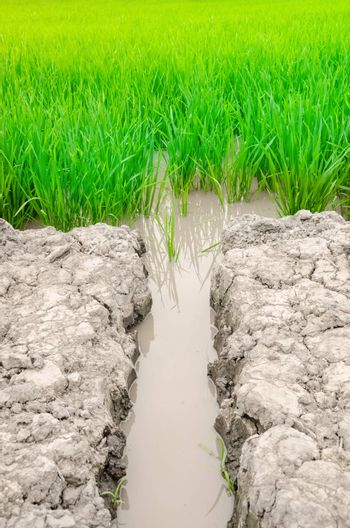 brook water into rice field