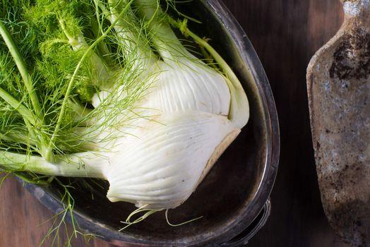 Fresh raw fennel root vegetable organic
