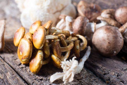 Fresh fungus mushrooms wild