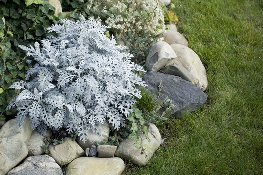 Decorative perennial flowers for landscape design
