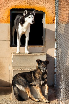 Dogs shelter abandoned