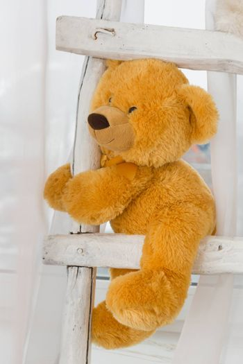 The photo depicts a teddy bear at the stairs