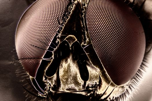 Micro Photo of a Fly
