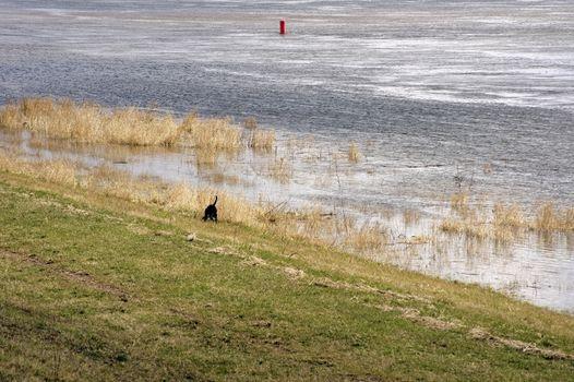 Hound Dog Pointer on the river