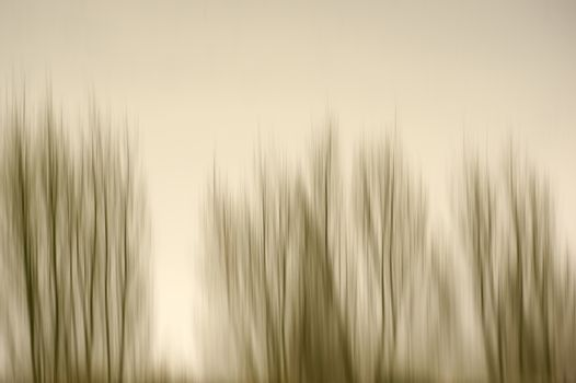 The abstract blur of wiped trees standing in row.