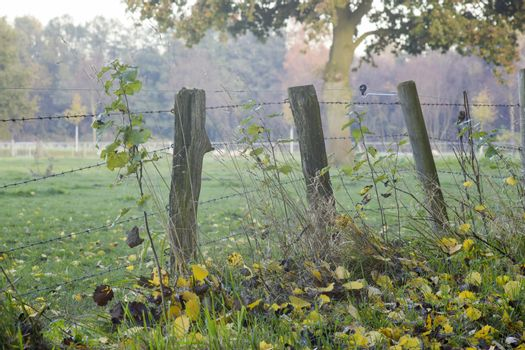 A wooden fence with barbed wire standing in a field