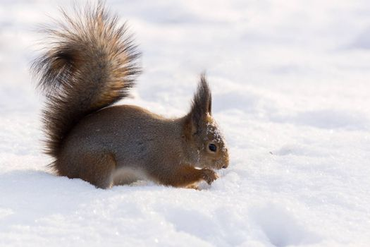 The photograph shows a squirrel in the snow