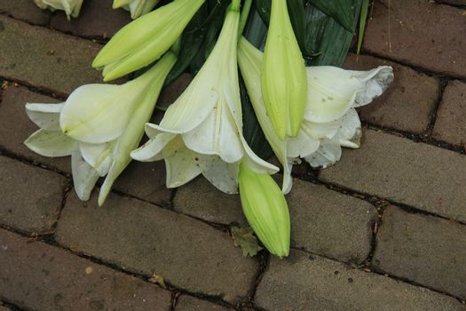 Sympathy Lilies