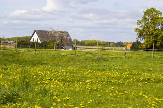 Spring meadows around a rural house, Lower Rhine, Germany