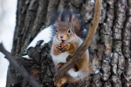 The photograph shows a squirrel on a branch
