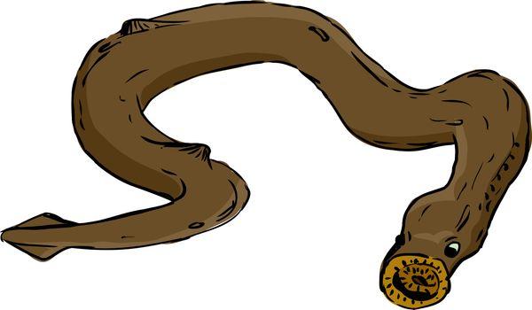 Single Isolated Lamprey