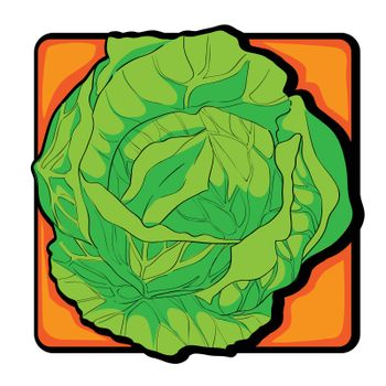 Cabbage clip art, doodle illustration isolated on white