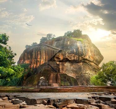 Bird over Sigiriya