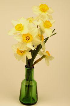 Yellow Daffodils Bunch