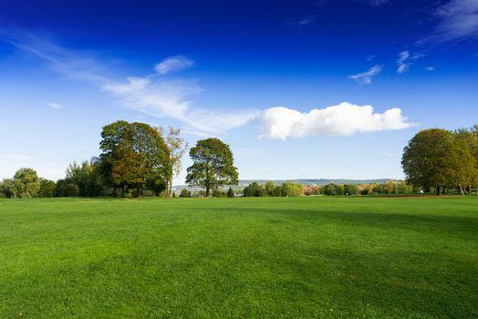 Grassy meadow with trees
