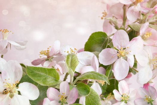 Spring blossoms against soft pink background