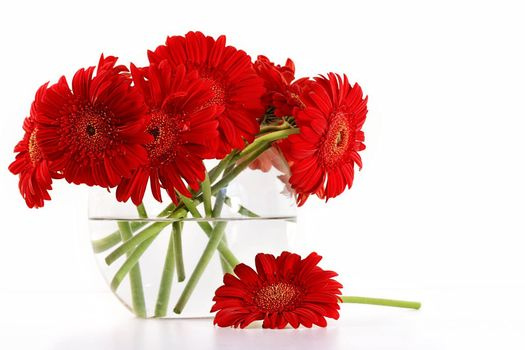Red gerber daisies in glass vase