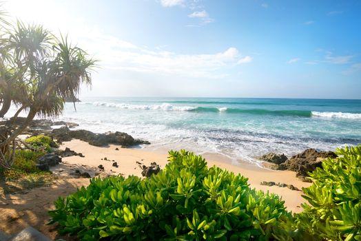 Exotic plants near ocean