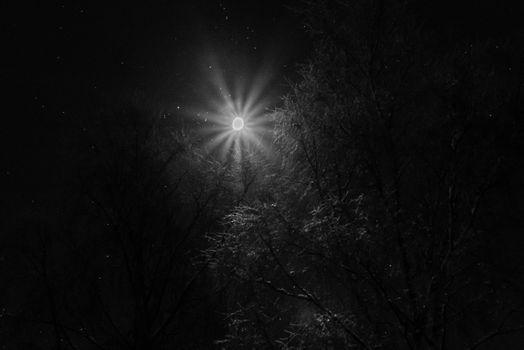 Månen over tretoppene i svart og hvitt med rim på trærne.