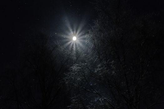 Månen over tretoppene en vinterkveld med rim på trærne.
