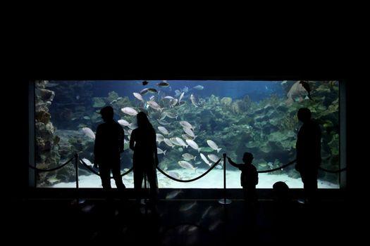 People watching big aquarium