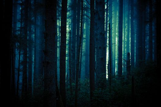 Dark Creepy Forest