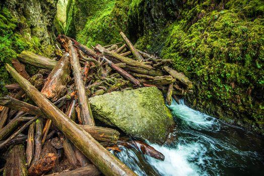 Natural Logs Dam
