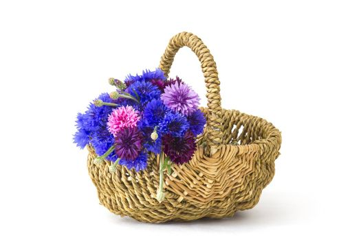 cornflowers in a basket on white background