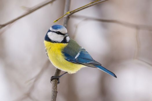 The photo shows the bird on the branches