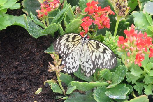Black and white Butterfly resting on flower