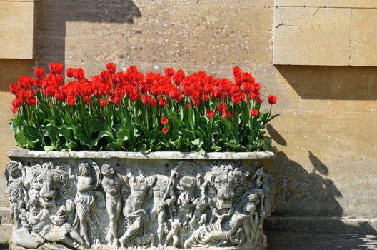 Bright red  tulips in decorative planter