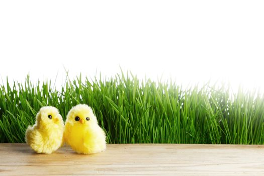 Easter cute toy chicks on green meadow