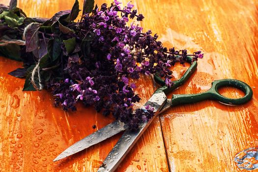 bunch of fresh blooming fragrant lavender
