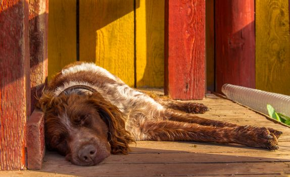Dog sleeping on the porch