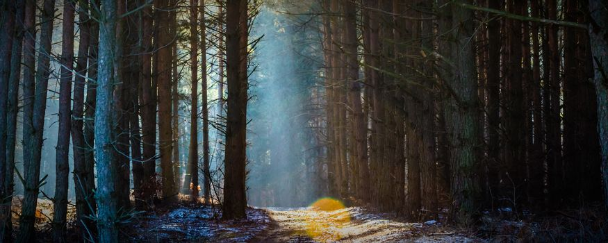 Sunlight in the grey forest, nature series