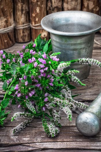 Peppermint is perennial herbaceous plant