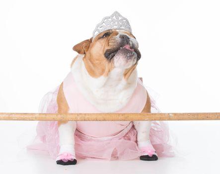 english bulldog female wearing ballerina costume on white background