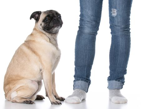 mixed breed dog sitting at the feet of his owner on white background