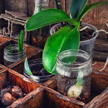 seedling plant in  box