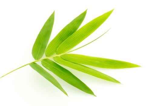 Fresh bamboo leaves border isolated on white background, botanic