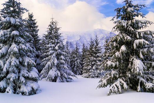 Snowy slope