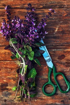fragrant lavender