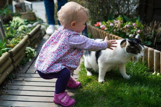Young blond girl trying to caress a white and black cat