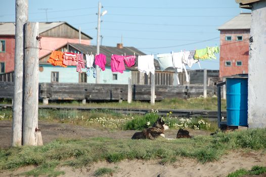 Dog under clothes drying on line