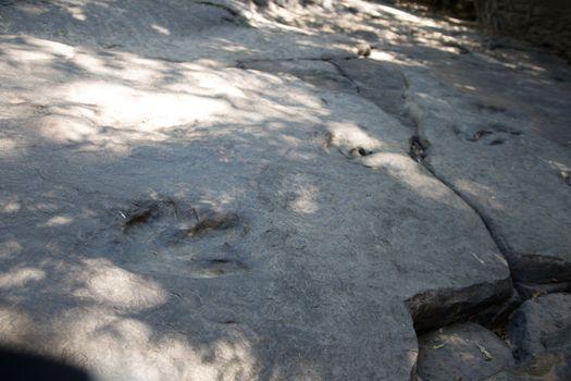 Real Detail of dinosaur tracks in thailand (dinosaur, footprints, footprint)