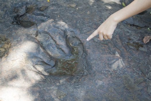 Detail of dinosaur tracks in thailand (dinosaur, footprints, footprint)