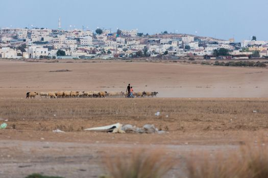 herdsmen lead a flock of sheep in the desert