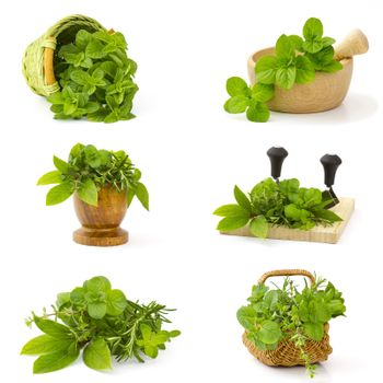 collection of freshly harvested herbs on white background